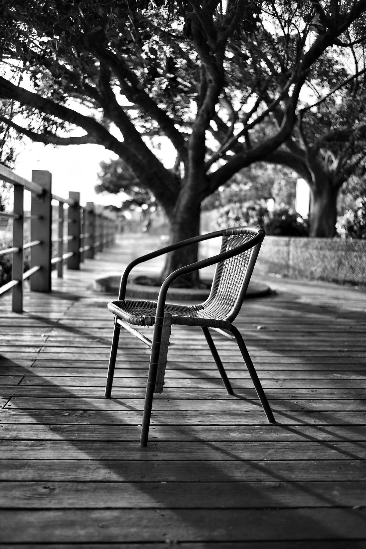 kostenlose foto baum schwarz und wei holz wei fotografie blatt sessel sitz fr hling. Black Bedroom Furniture Sets. Home Design Ideas