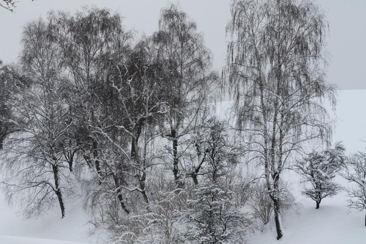 Images gratuites neige hiver noir et blanc monument for Couverture plante hiver