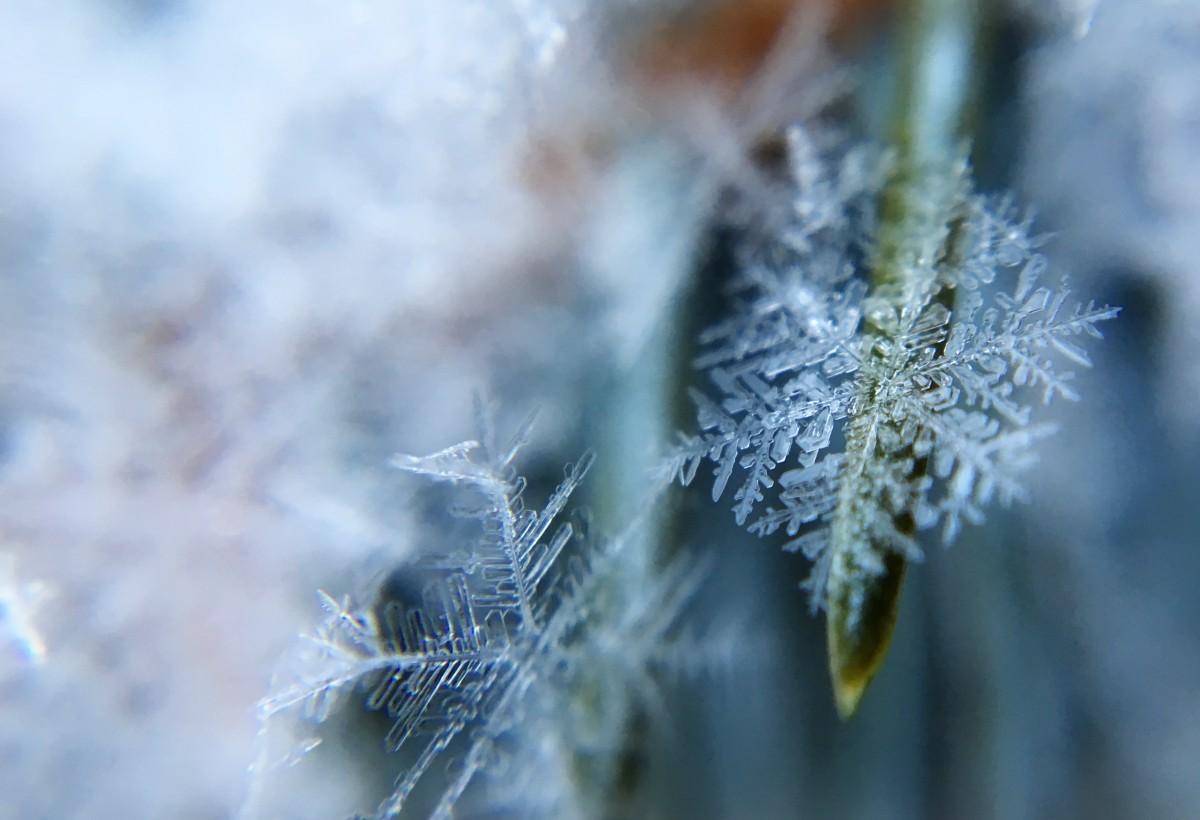träd vatten natur gräs gren snö vinter- växt blad blomma Frost is grön makro höst flora säsong snöflinga närbild kristall- frysning makrofotografering gräs familj växtstemen