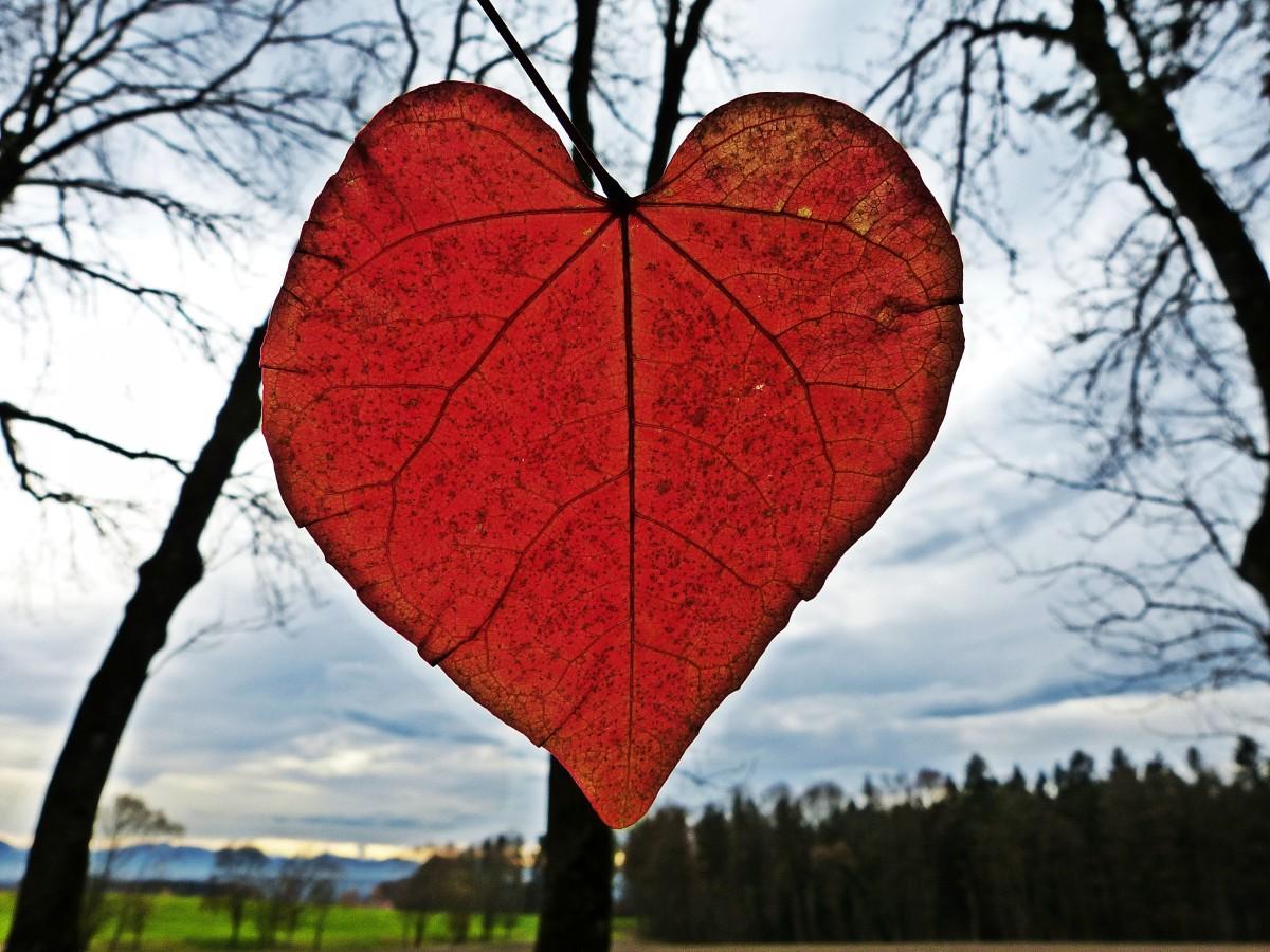Сердечко осень картинка