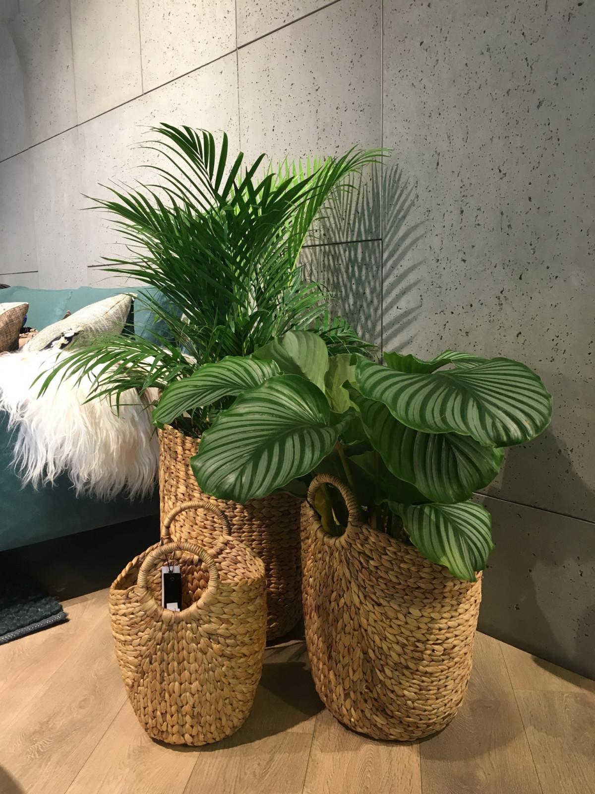 Images gratuites plante bois int rieur vert meubles - Meuble plantes d interieur ...