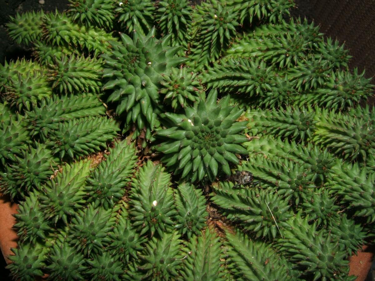 Images gratuites arbre branche plante feuille fleur for Arbres a feuilles persistantes
