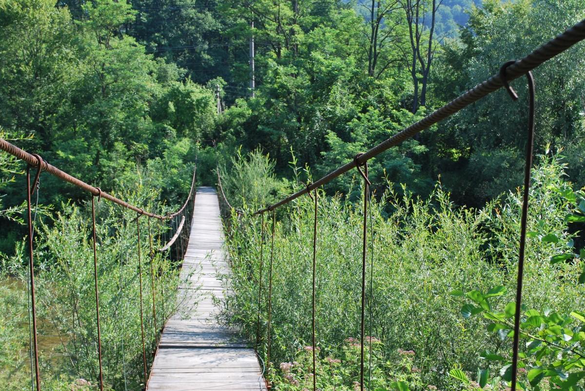 Gratis afbeeldingen natuur bos brug zonlicht blad hangbrug groen oerwoud regenwoud - Leefgebied canape ...