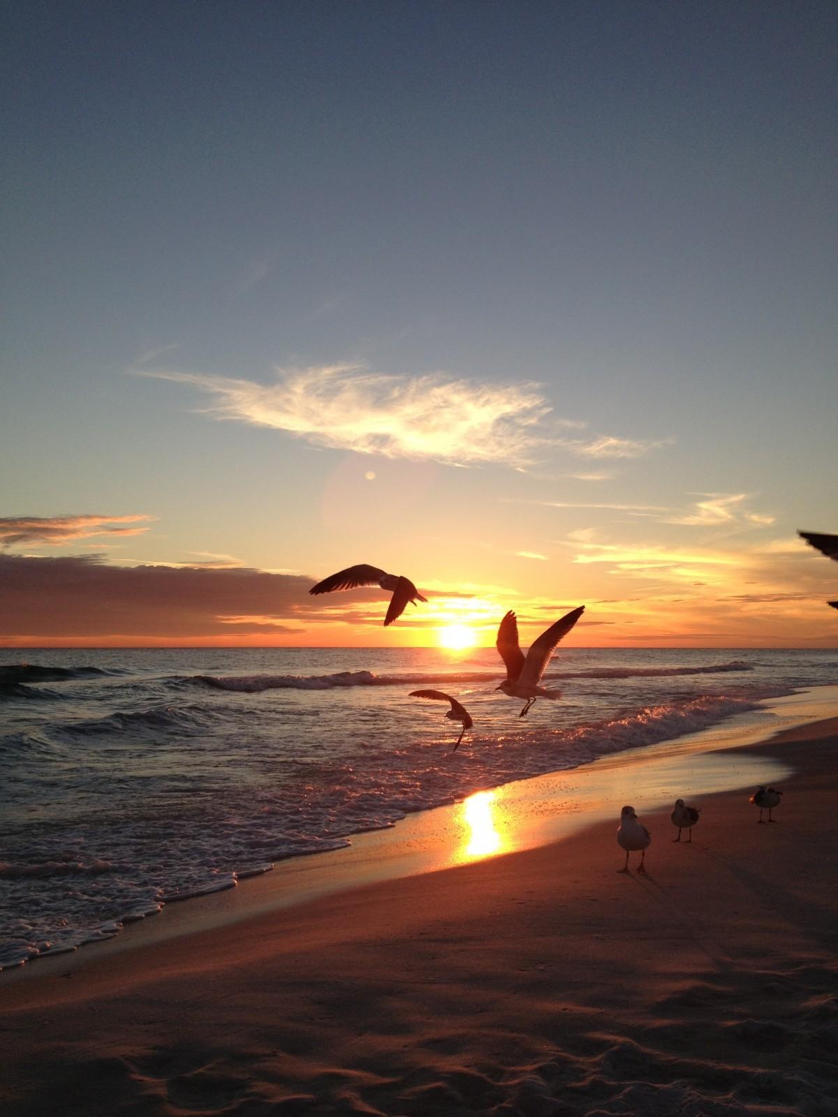 картинки море чайки вертикальные человек мысли