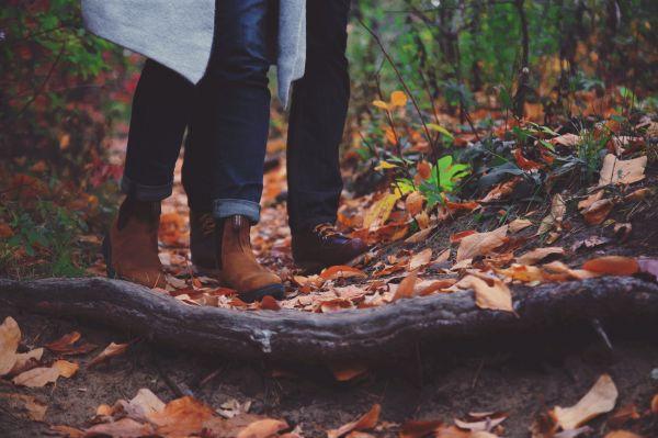 tree,nature,forest,wood,leaf,autumn