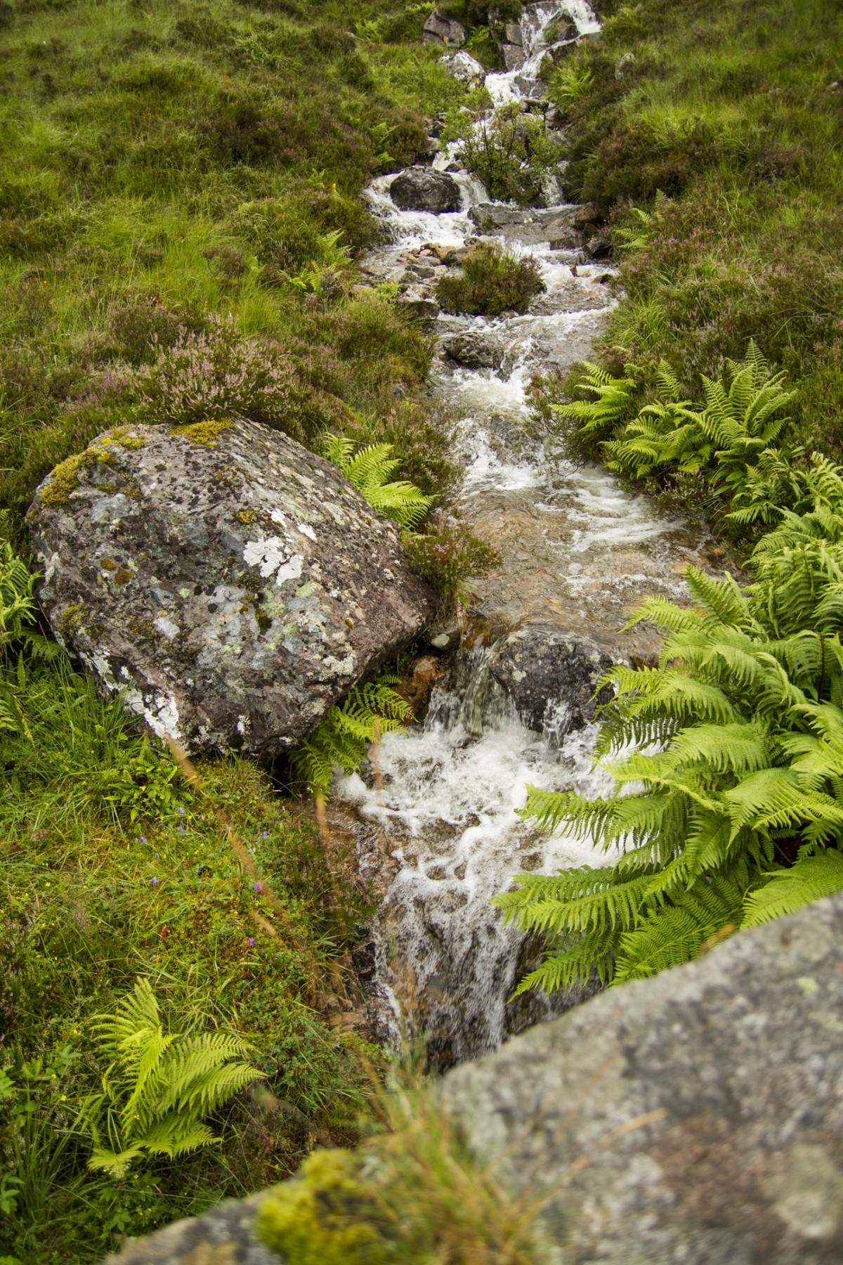 Gratis afbeeldingen boom water gras vloeistof wiel bloem glas beweging groen stroom - Muur steen duidelijk ...