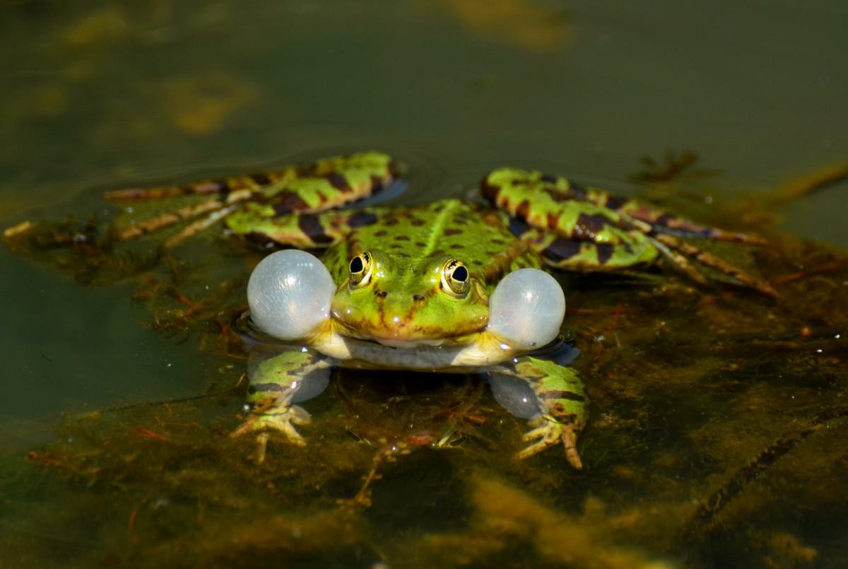 Fotos Gratis Naturaleza Animal Fauna Silvestre Verde