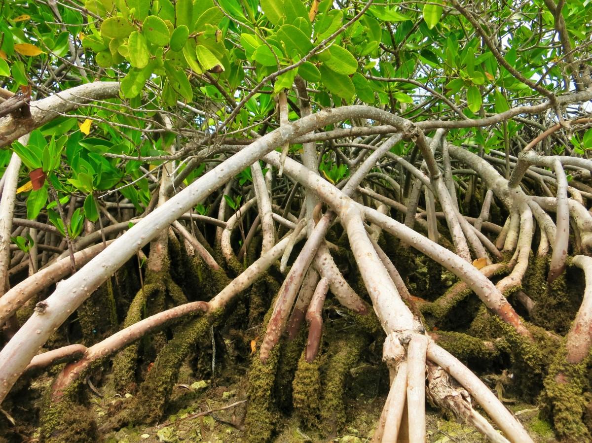 images gratuites arbre branche fleur tronc aliments jungle produire botanique jardin. Black Bedroom Furniture Sets. Home Design Ideas