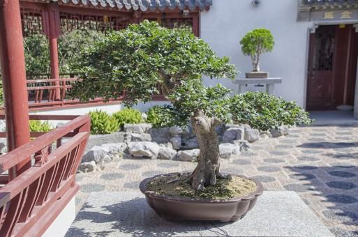 images gratuites arbre fleur ville botanique jardin. Black Bedroom Furniture Sets. Home Design Ideas