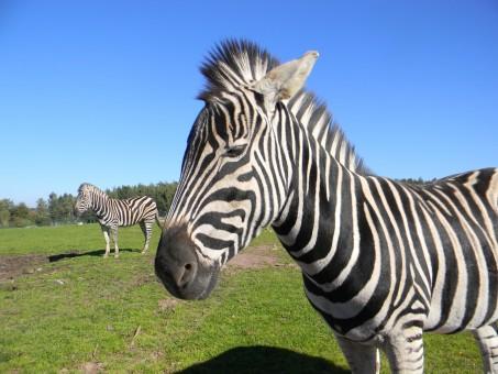 piquet pour clôture chevaux