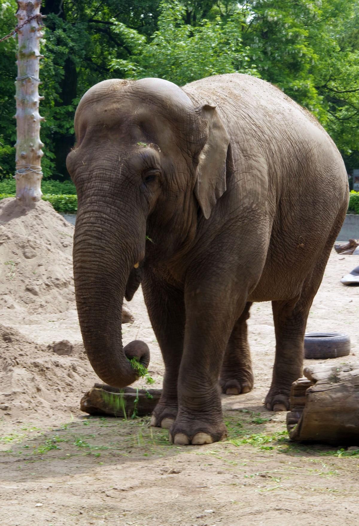 Images gratuites faune zoo afrique l phant passerelle animal sauvage grand norme - Photos d elephants gratuites ...