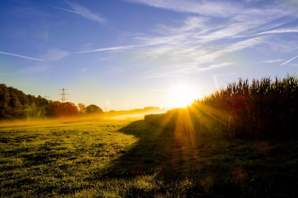 Free Images : landscape, nature, horizon, branch ...