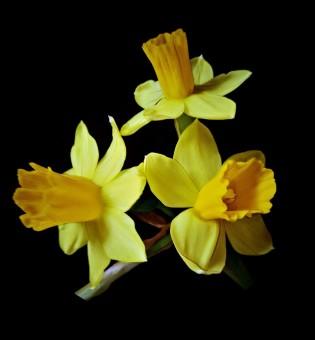 Cánh Hoa Màu Vàng Nhạt Hình ảnh Hình ảnh đẹp Pxhere
