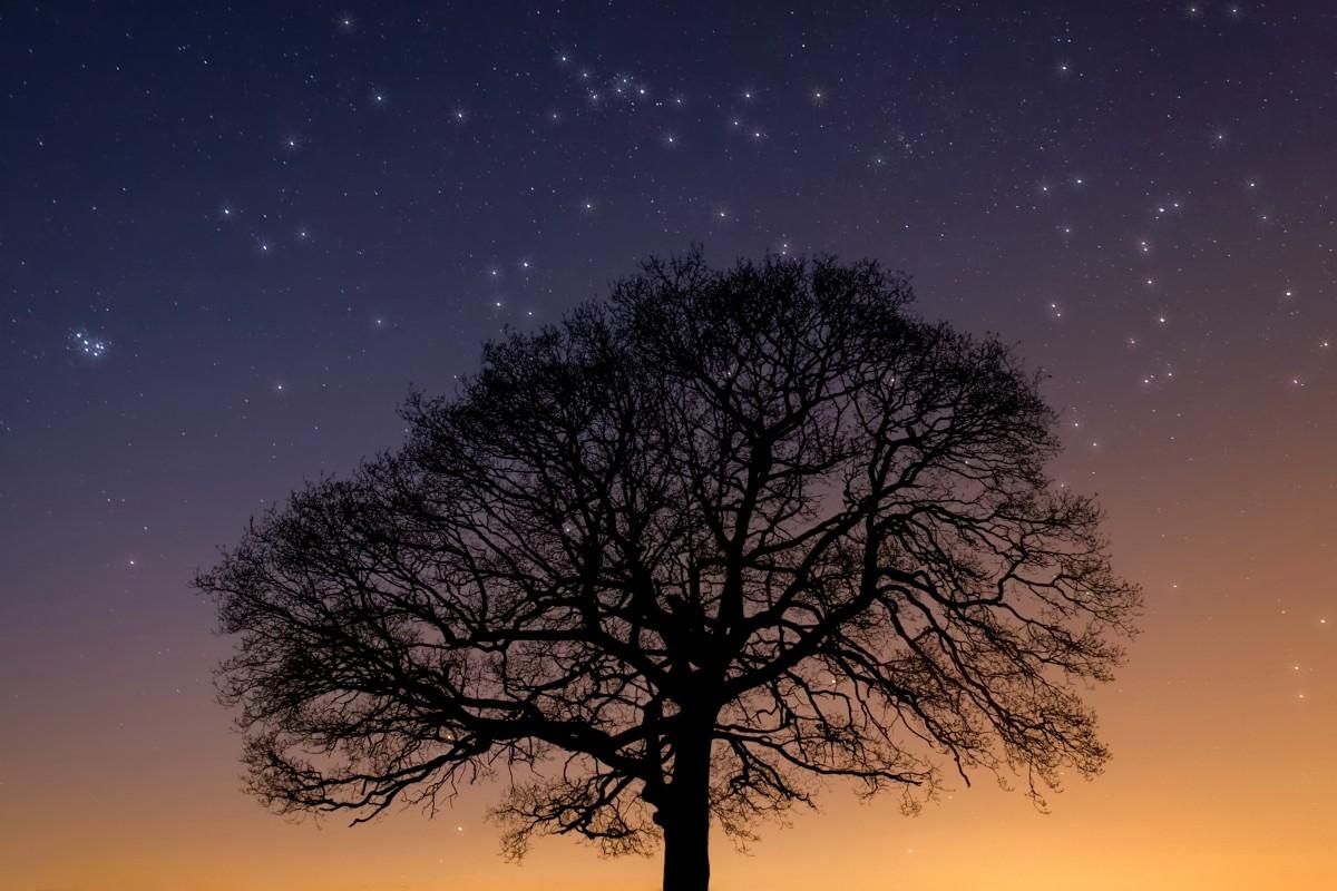 картинки деревьев ночью сегодняшний день