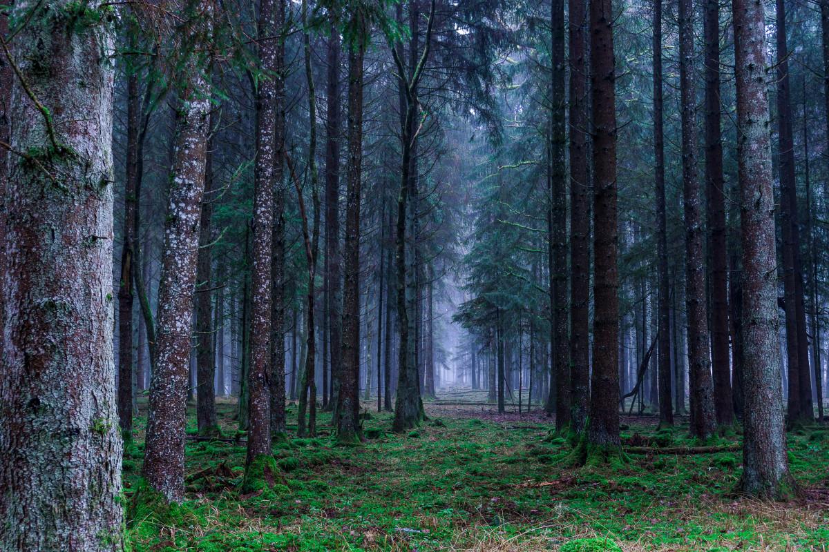 Gambar Pemandangan Musim Gugur Pohon Jerman Alam Suasana Hati