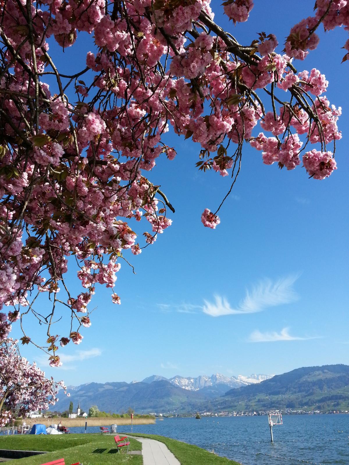 Images Gratuites : arbre, plante, ciel, Lac, été, marche, printemps, produire, parc, bleu, fleur ...