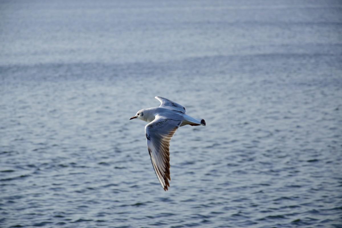 Images gratuites eau la nature aile lac stylo - Images d animaux sauvages gratuites ...