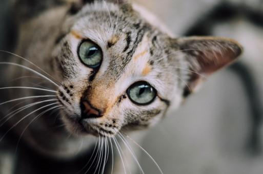 Kätzchen,Katze,Säugetier,Fauna,Nahansicht,Whisker