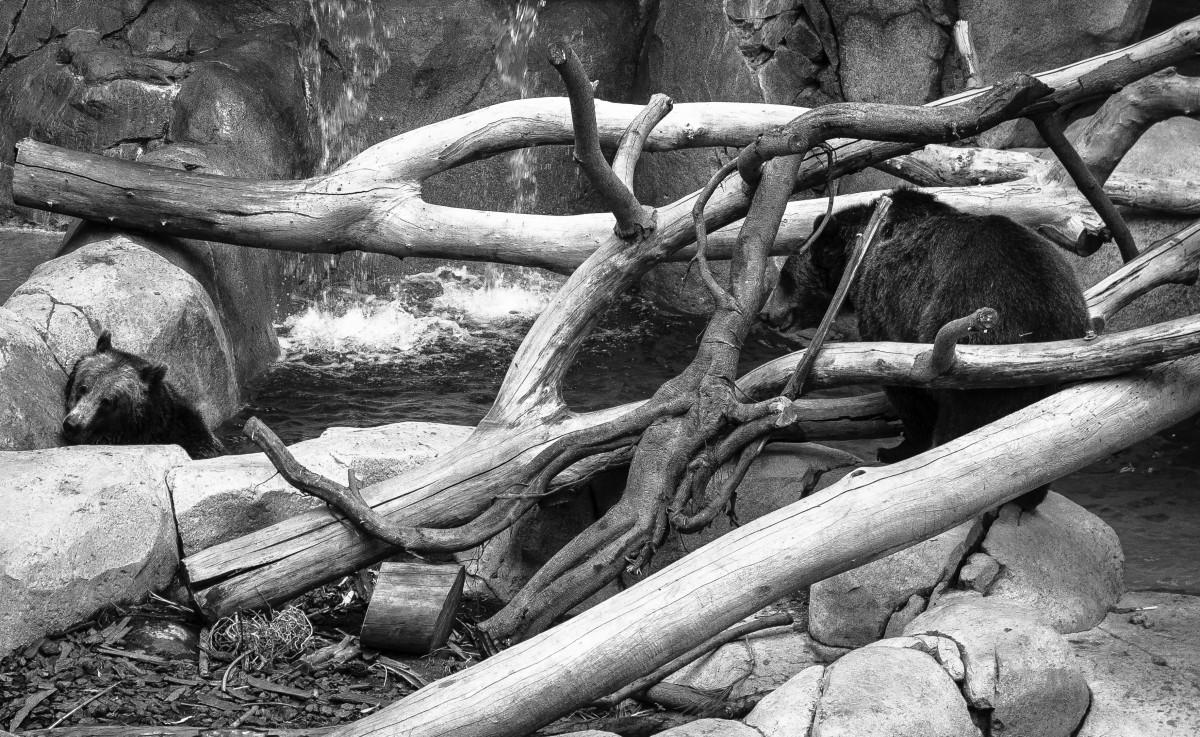 images gratuites bois flott arbre branche noir et blanc tronc zoo monochrome racine. Black Bedroom Furniture Sets. Home Design Ideas