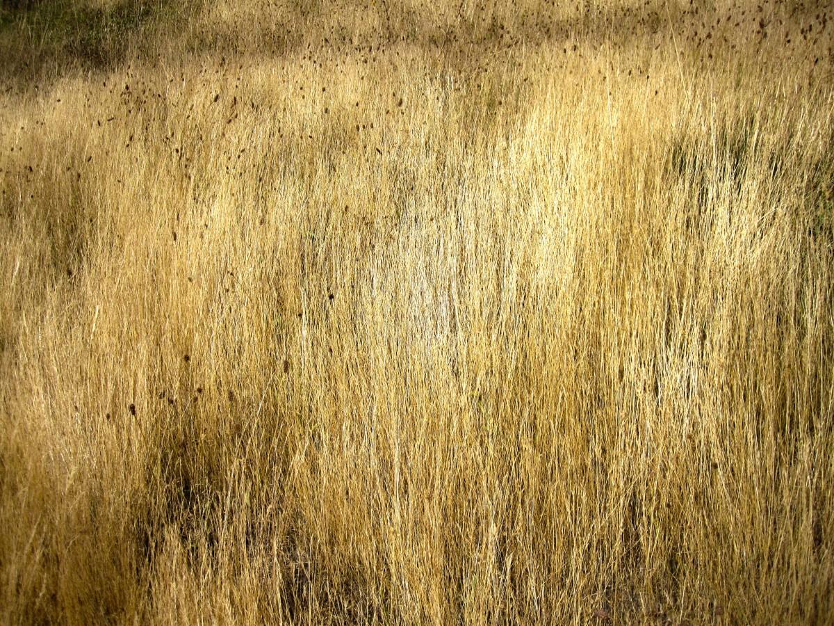 Free Images Tree Plant Wood Field Prairie Texture