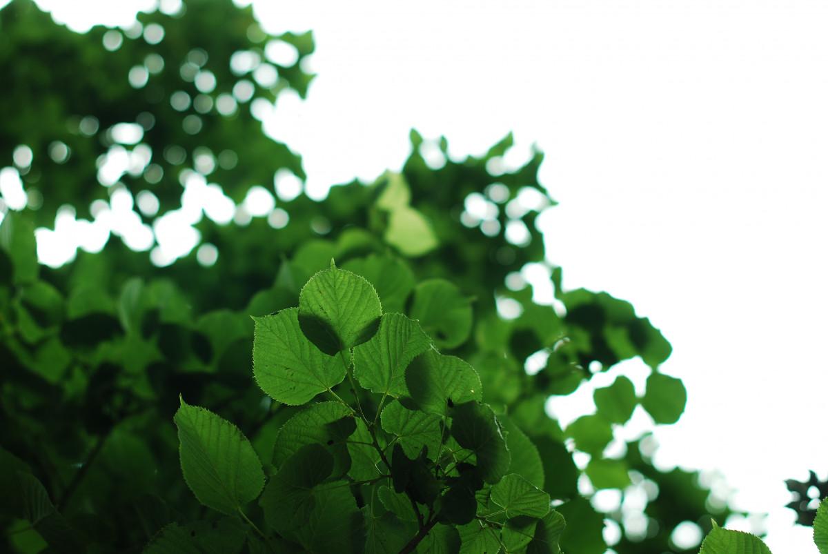 木, 自然, 森林, 成長, 工場, テクスチャ, 葉, 花, 夏, 環境, パターン, 春, 緑, ハーブ, 色, ナチュラル, 植物学, 環境, フローラ, 植物性, 緑, 鮮度, クローバー, エコ, 生態学, 葉, 設計, 明るい, オーガニック, 開花植物, 年間プラント, 陸上植物