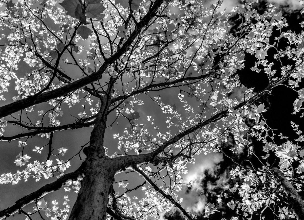 картинки весна монохром ленивый мире