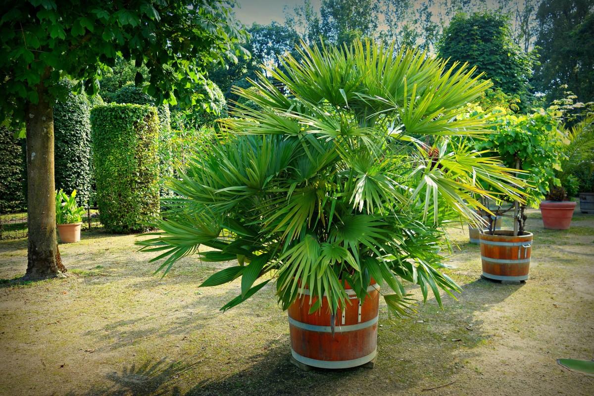- Plante ornementale exterieur ...