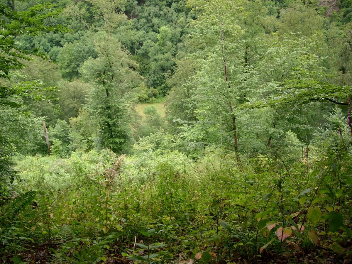 картинки с лиственным лесом поляне поможет