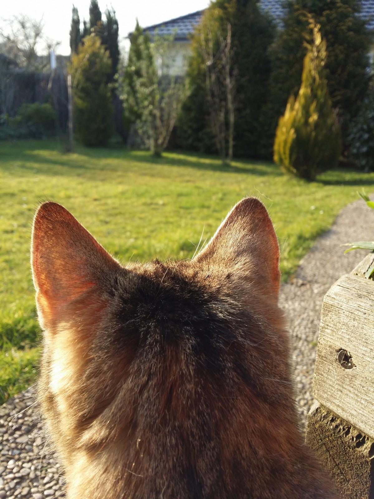 Картинка ухо кошки