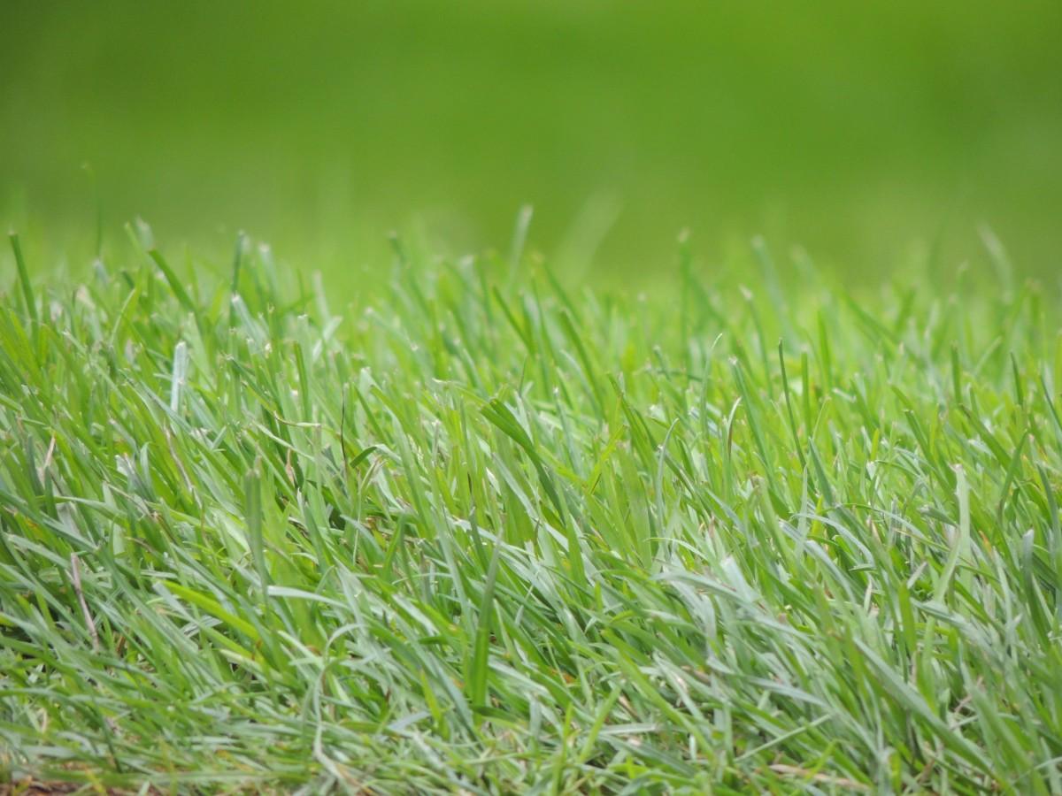 Открытка зеленая травка