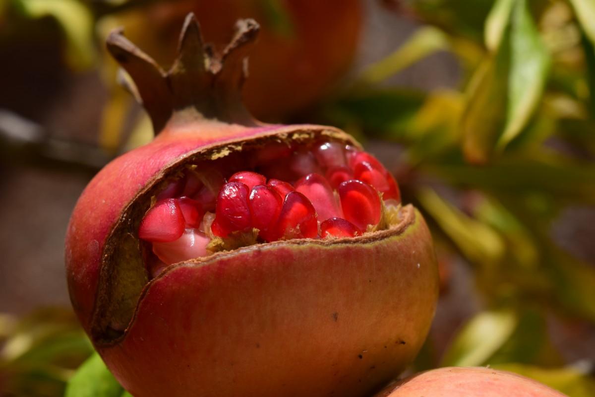 Images gratuites framboise fruit baie aliments produire grenade hanche plante fleurs - Grenade fruit comment manger ...