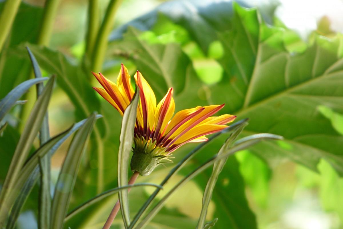 Фото цветов в лучах солнца