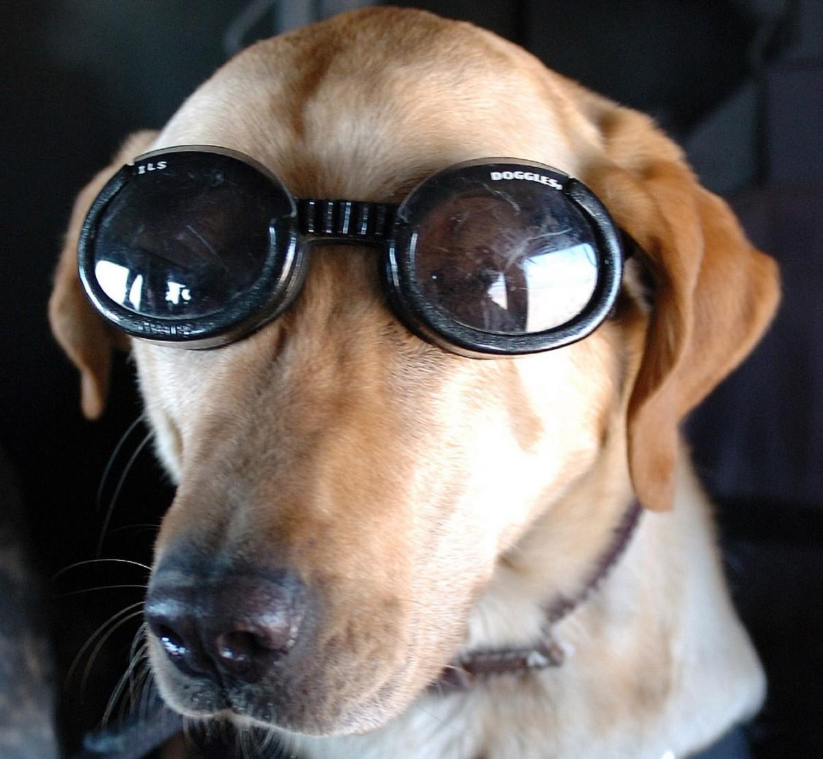 Днем рождения, картинка с псом в очках