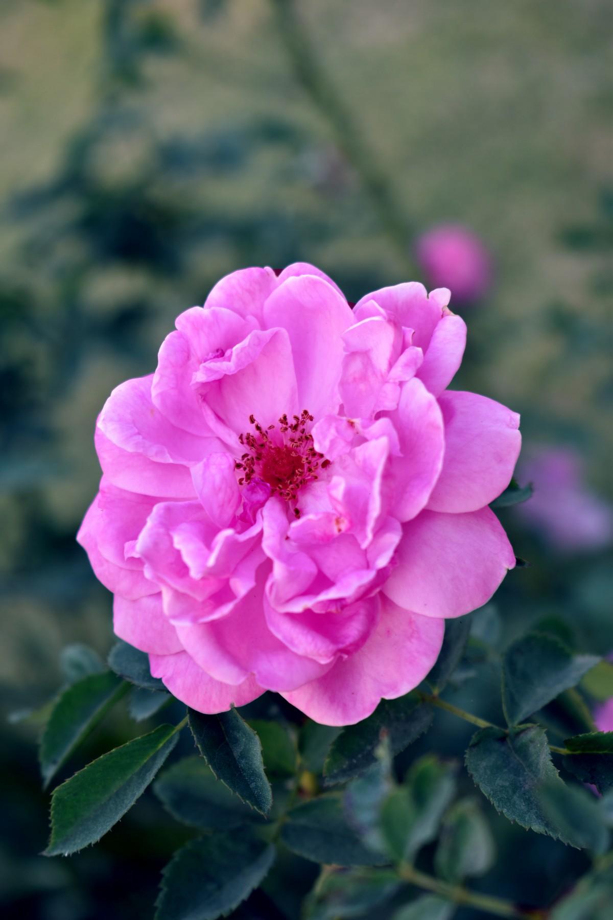 alam mekar menanam bunga daun bunga Bunga