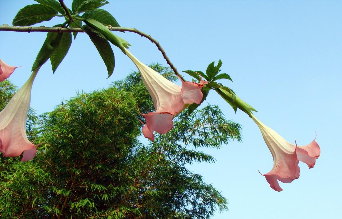 Images gratuites feuille fleur jungle botanique for Plante jungle