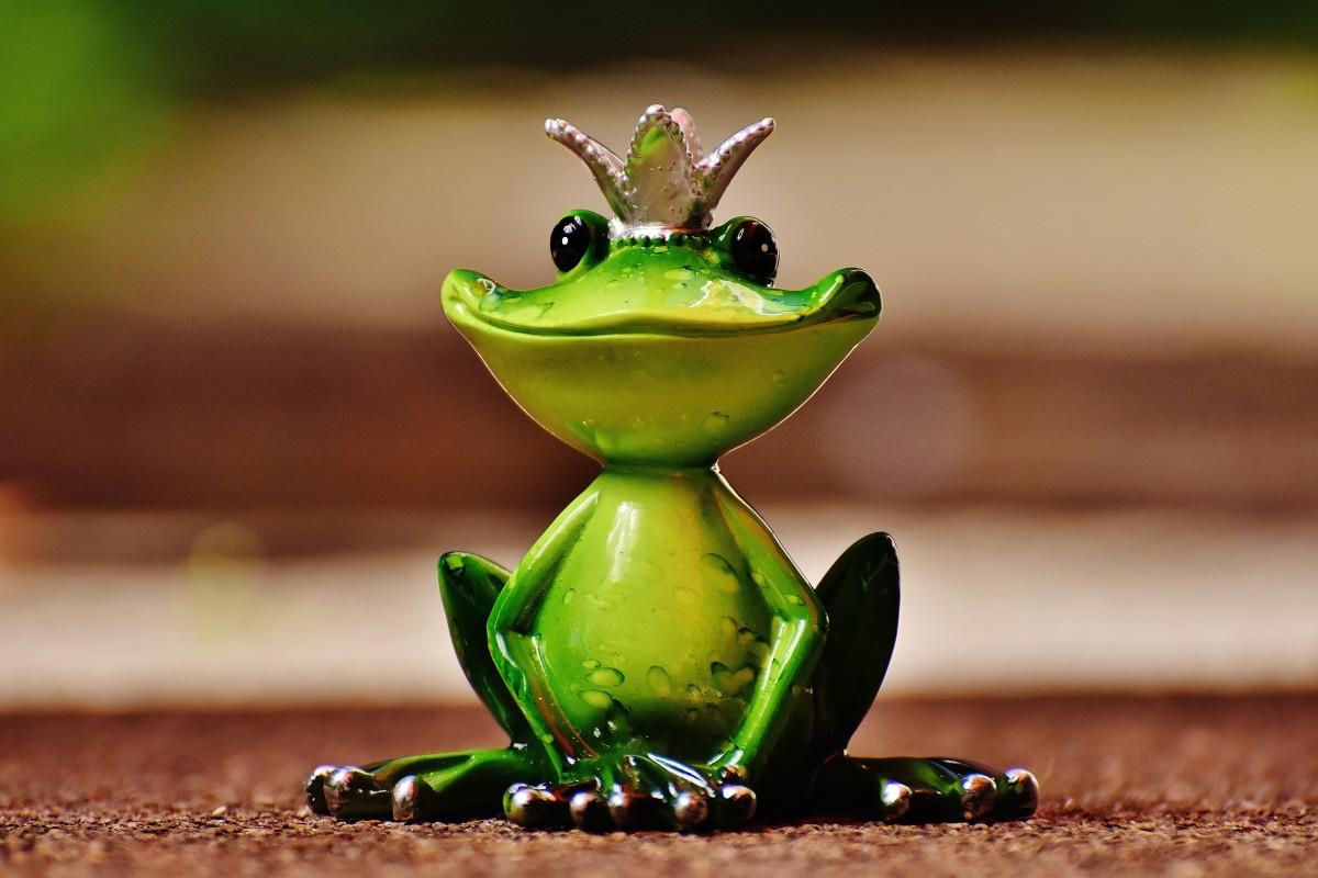картинки красивые с лягушками почему