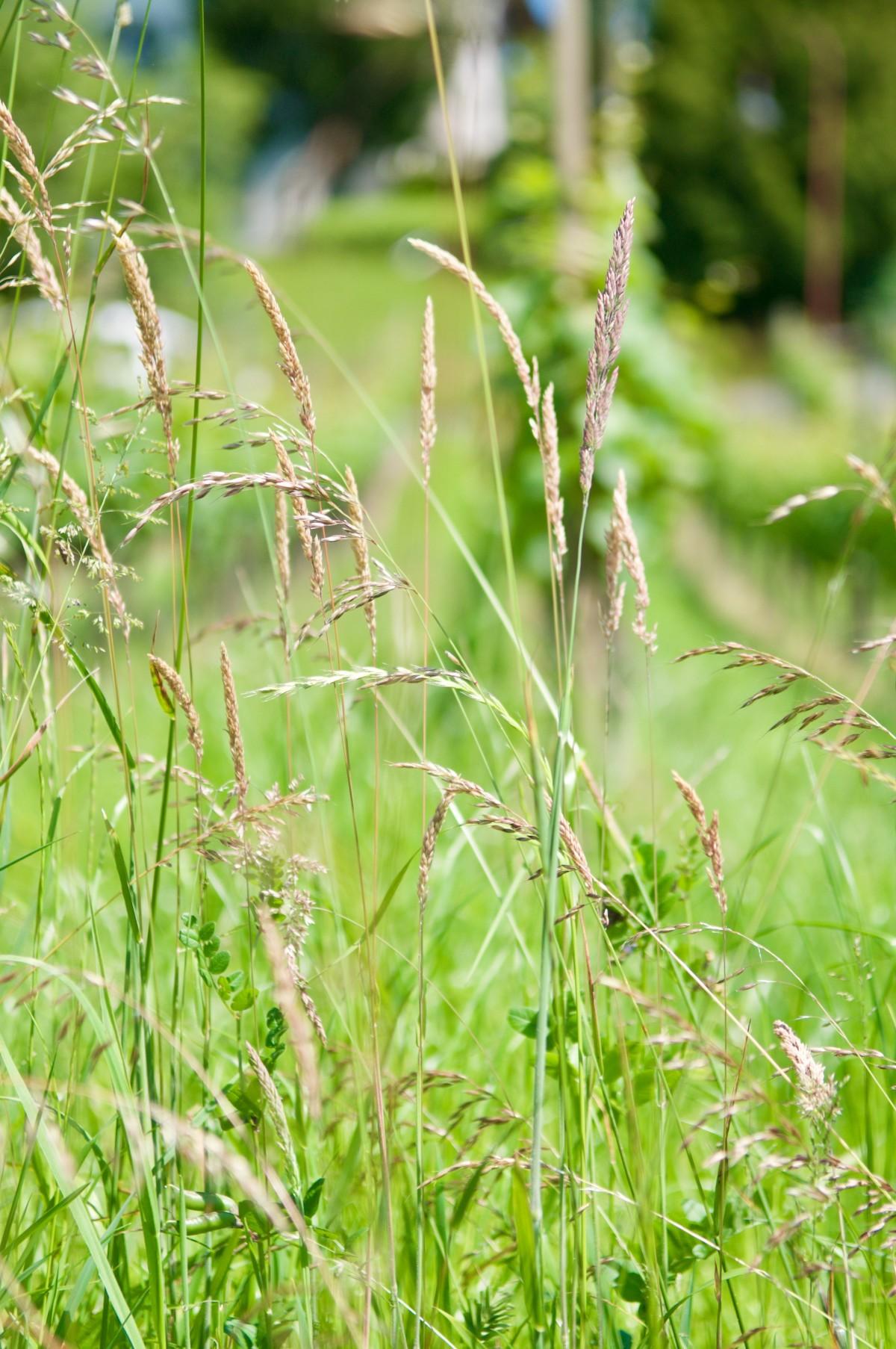 Images gratuites la nature herbe champ pelouse prairie prairie feuille fleur t vert - Quand planter de la pelouse ...