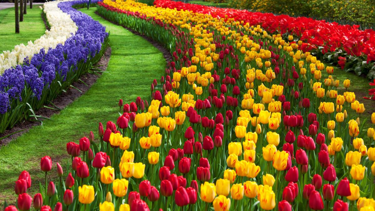 Fotos de flores de floriculturas 42