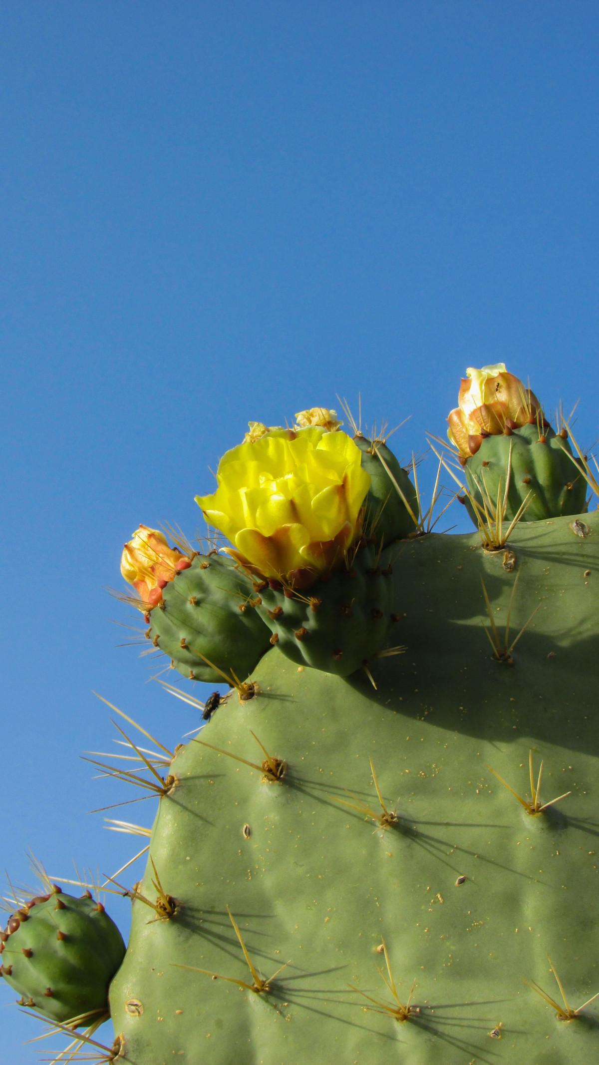 kostenlose foto baum natur kaktus scharf blume. Black Bedroom Furniture Sets. Home Design Ideas
