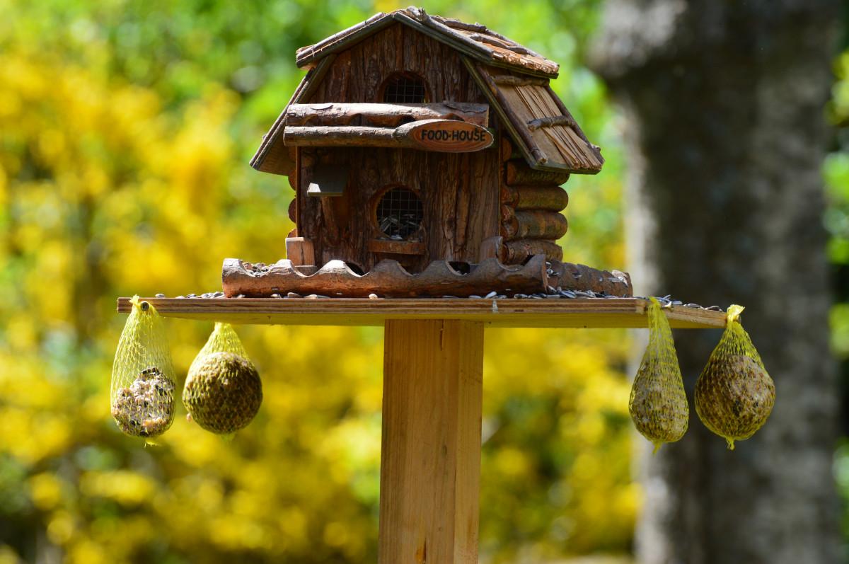 ilmaisia kuvia luonto ruoka vihre takapiha puutarha keinu lintujen ruokinta el imet. Black Bedroom Furniture Sets. Home Design Ideas