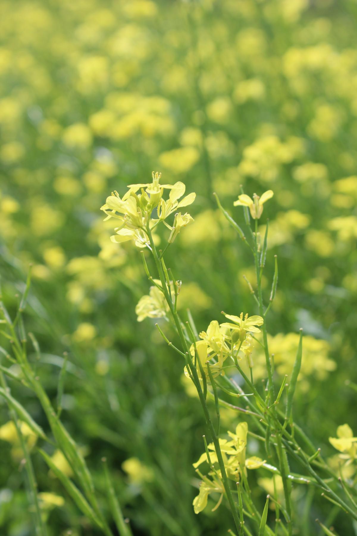 Пряная трава с желтыми цветами фото