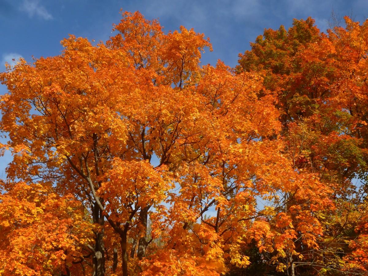 был осенние деревья фото и названия целом актер