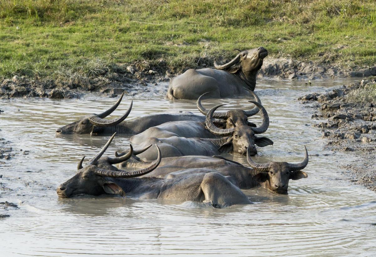 Images gratuites animal faune sauvage boue parc mammif re l phant nationale safari - Photos d elephants gratuites ...