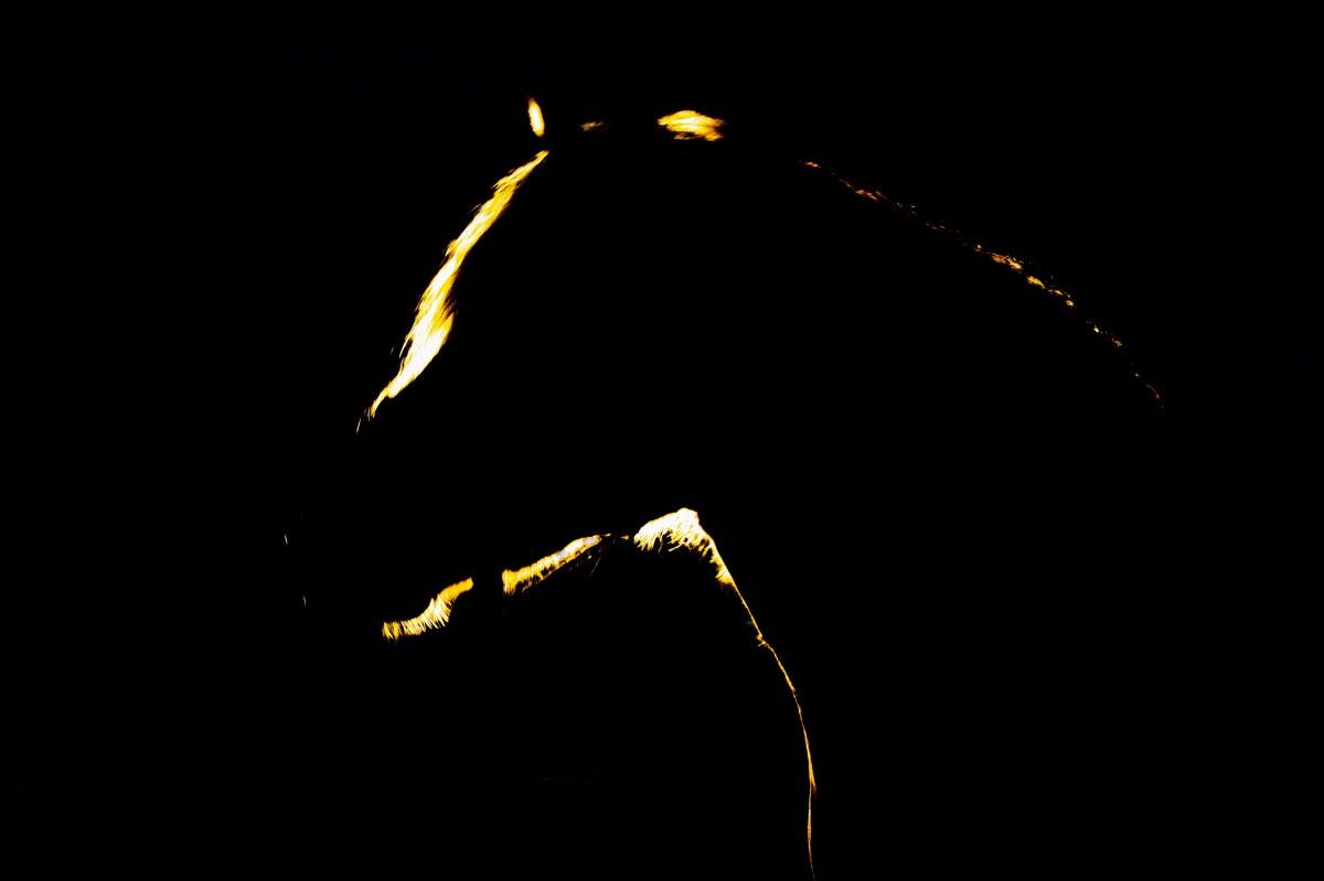 Kostenlose foto : Licht, Himmel, Nacht-, gespenstisch, mystisch ...