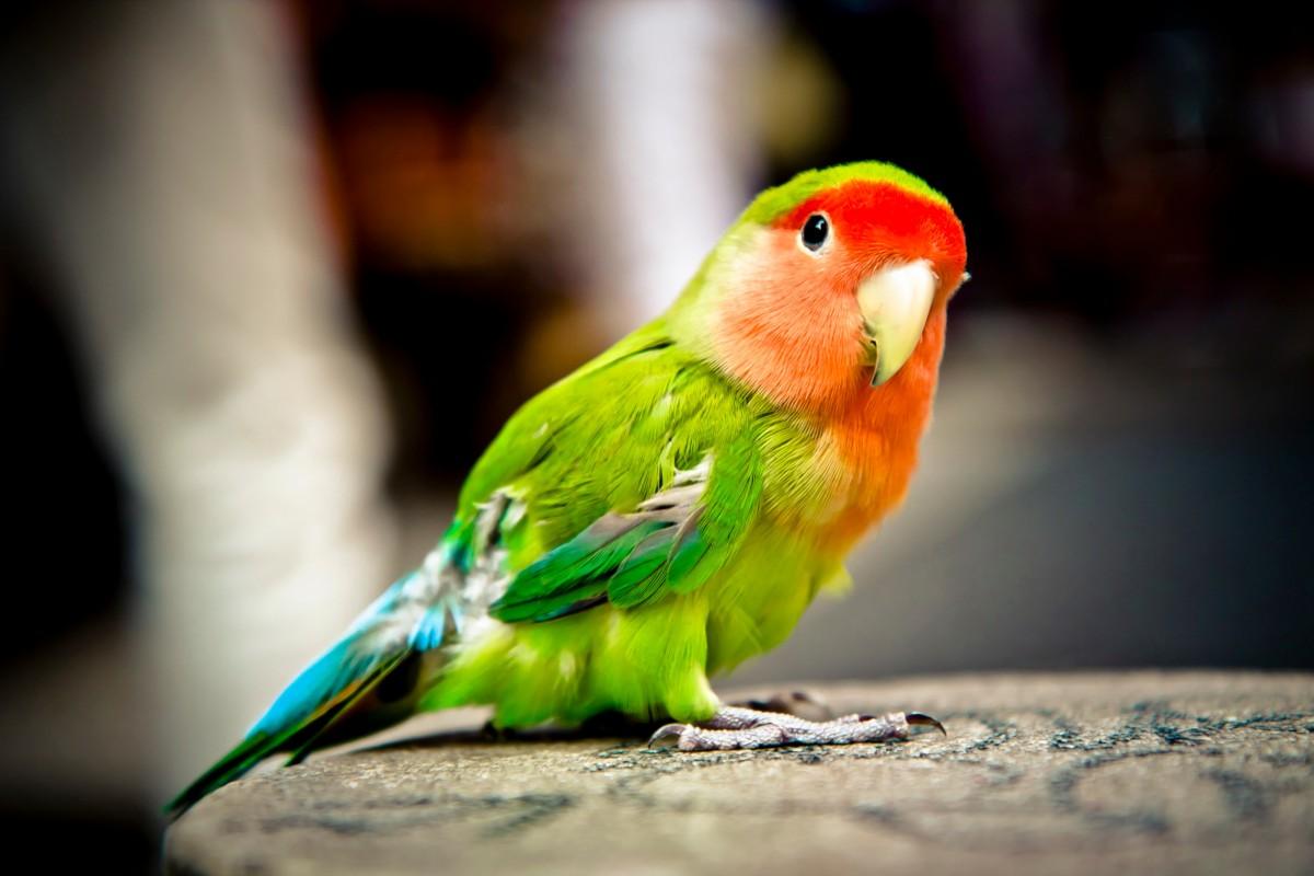 Жанейро картинки, попугаи картинка фото