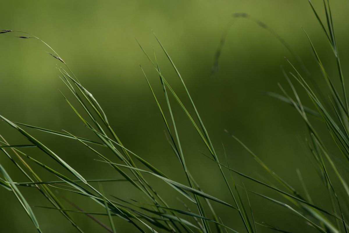 Kostenlose Foto Natur Ast Tau Pflanze Feld Wiese Prärie
