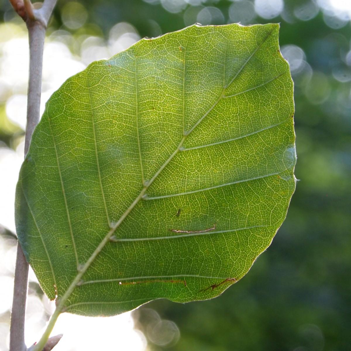Fotos gratis rbol bosque rama fruta hoja flor for Arboles para veredas hojas perennes
