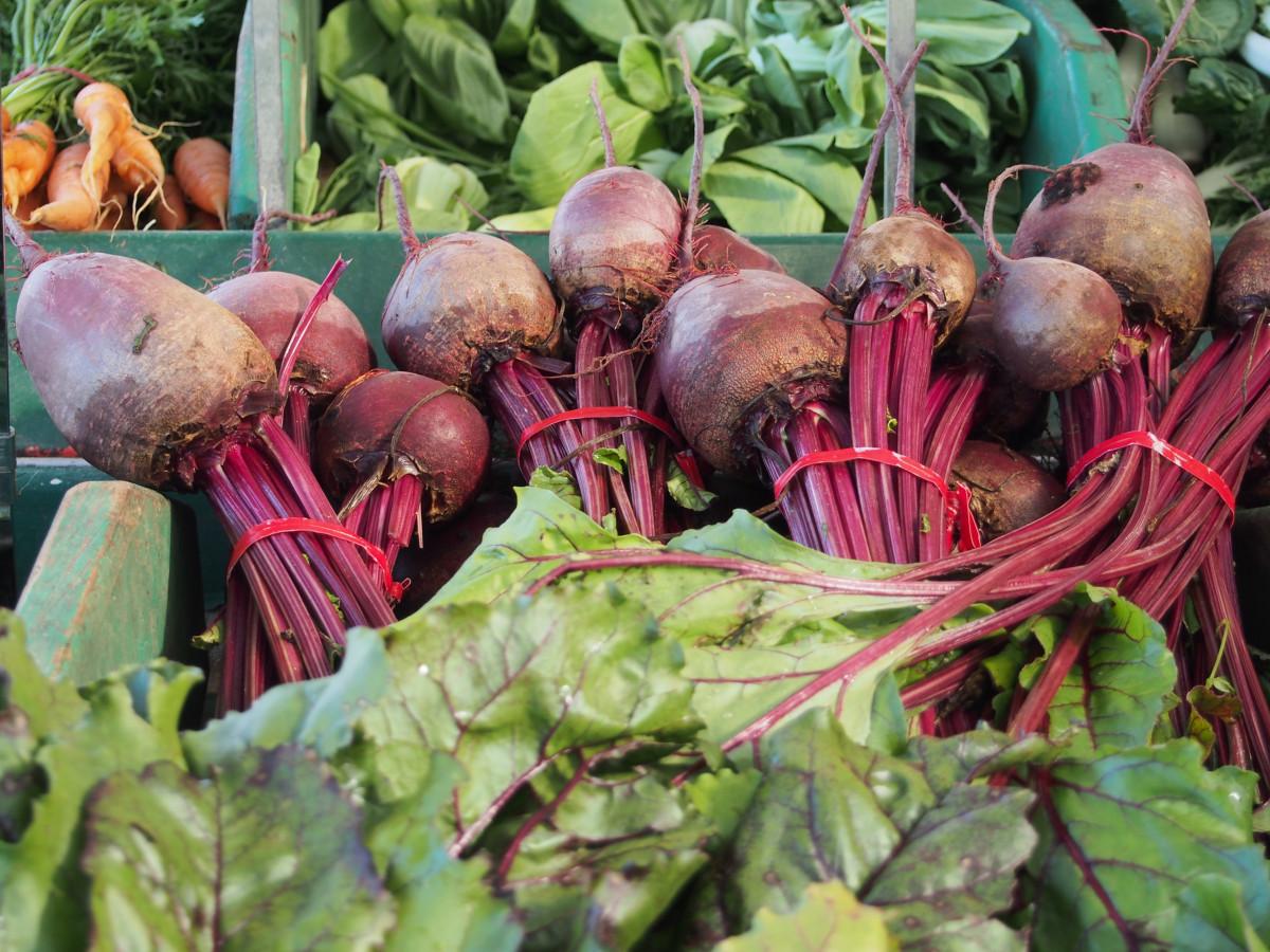 Агротехника выращивания свёклы. Посадка свёклы семенами 97