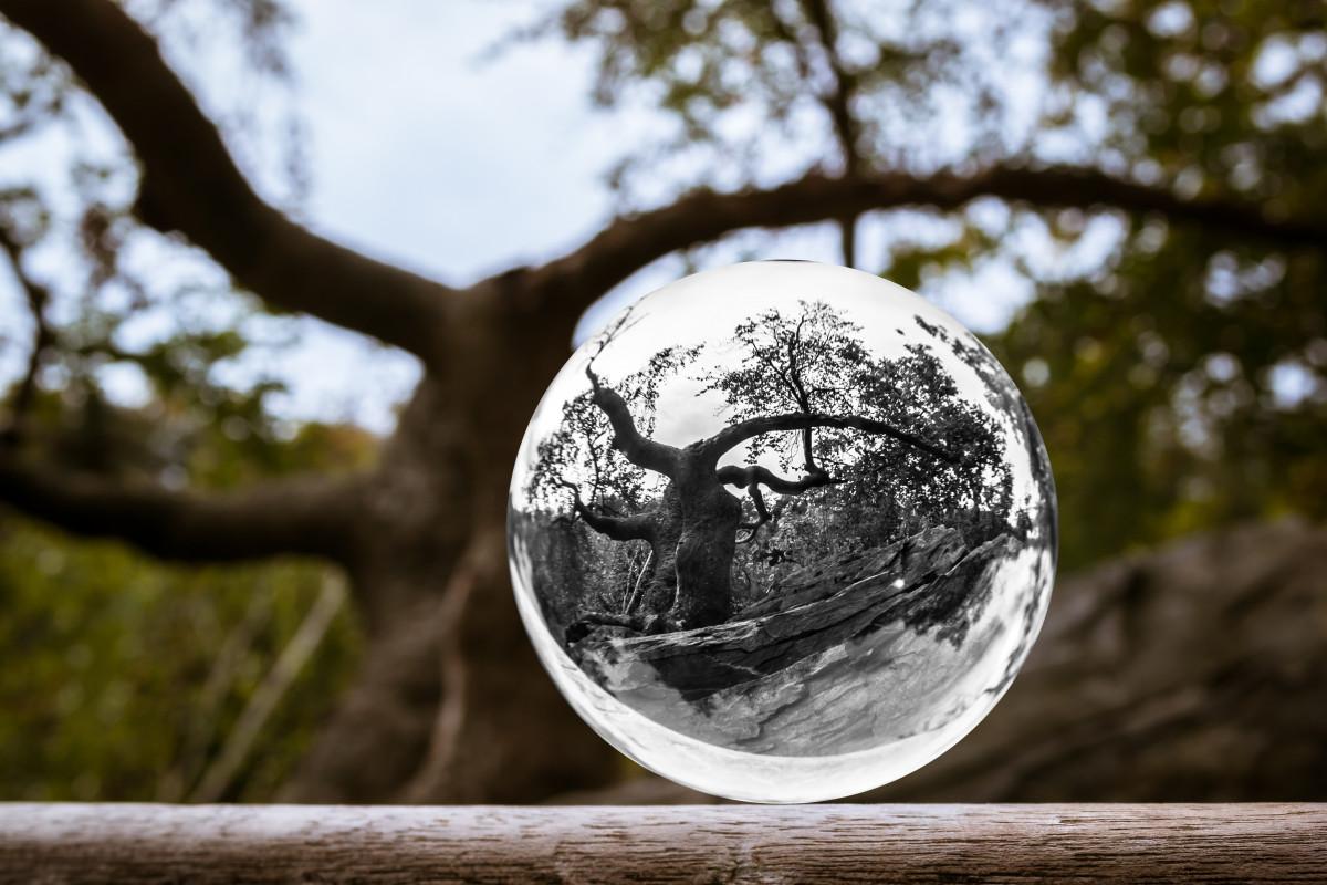 Gambar Pemandangan Pohon Alam Hutan Batu Cabang Musim Dingin Cahaya Menanam Putih Fotografi Sinar Matahari Daun Bunga Musim Semi Refleksi Musim Gugur Estetis Bola Kaca Image Dunia Foto Sphere Kayu Tanaman