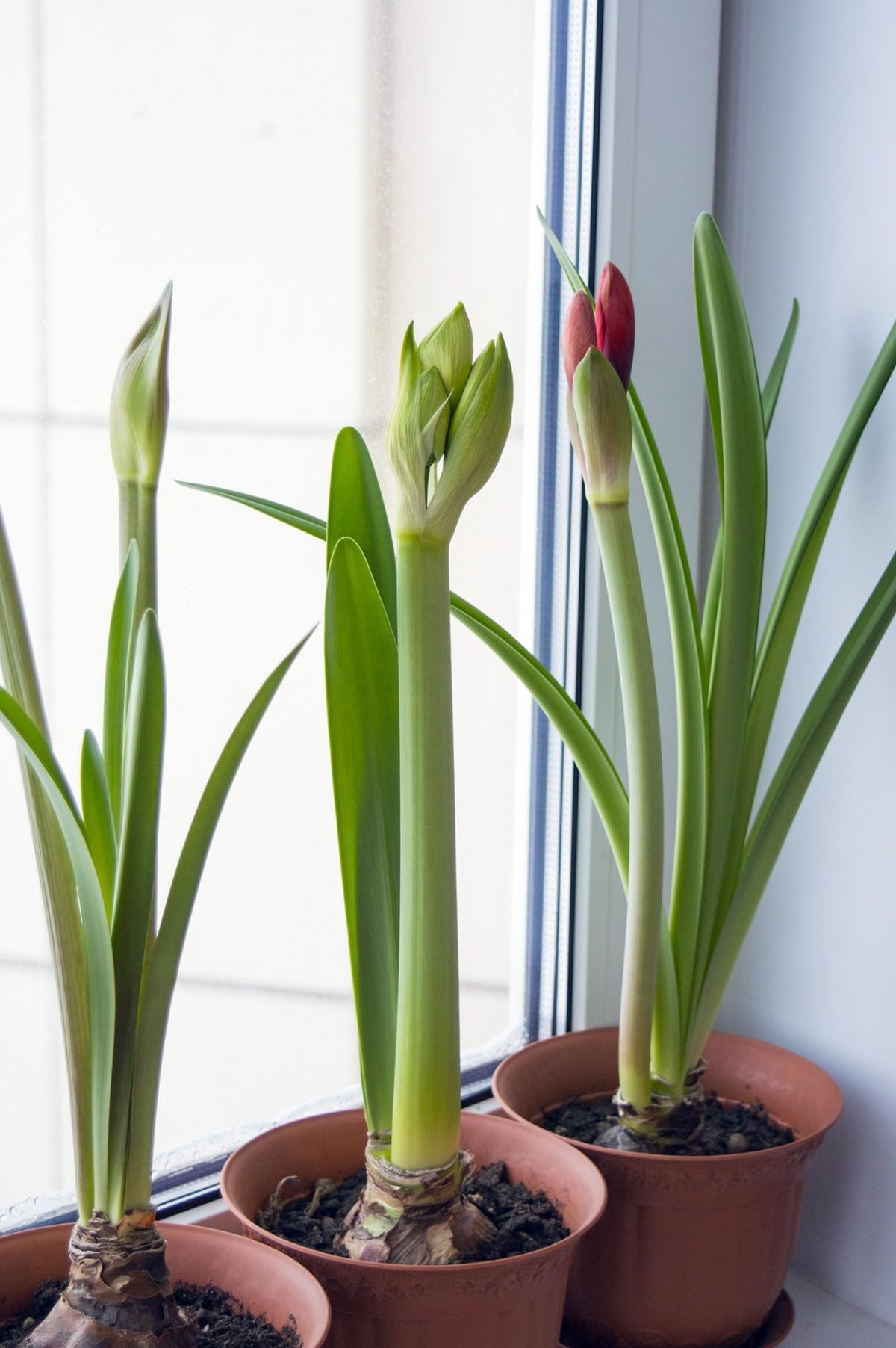 images gratuites p tale floraison collection int rieur flore plante d 39 appartement. Black Bedroom Furniture Sets. Home Design Ideas